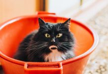 Four-Best-Surprising-Truth-of-the-Pet-&-Animal-Hearts-on-lightroom-news