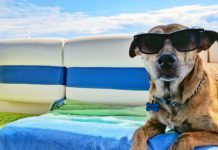 Summer-Month's-Day-Trips-with-Your-Beloved-Dog-on-lightroom-news